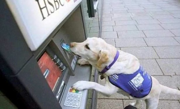 service-dog-uses-atm