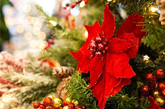 poinsettia in a Christmas arrangement