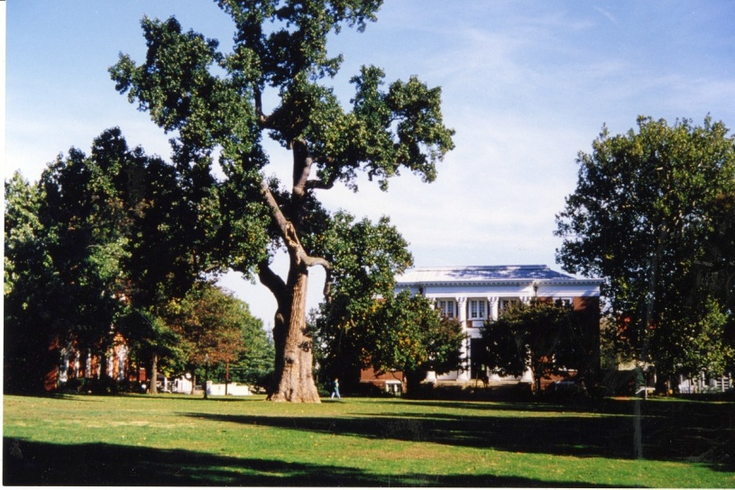 Image of the Liberty Tree where it stood on the campus of St. John's College, Annapolis Maryland